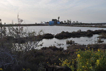 The beautiful natural Wetland Limassol Salt Lake landscape in Cyprus