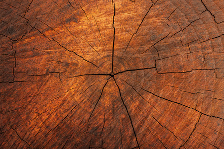 Natural Wood Crosssection Texture with aged cracks
