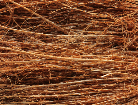 Close-up of Coconut fibre  Background Texture