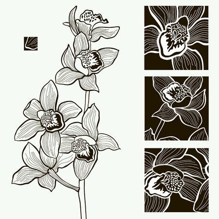 orchid branch: Vector design Monochrome vector illustration with an orchid Illustration