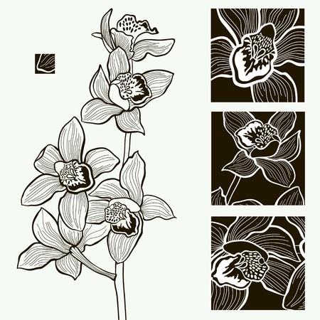 virágzó: Vektor tervezés monokróm vektoros illusztráció egy orchidea