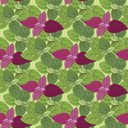 Vector design Seamless pattern with basil  Illustration