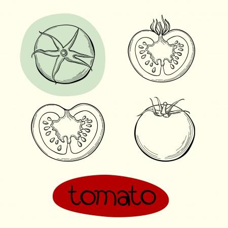 tomato: Vector design Background of tomato