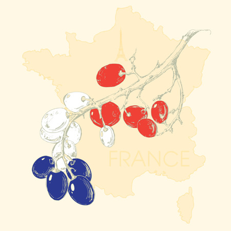 Map of France  Grapevine stylized French flag  Decorative illustration  Vector