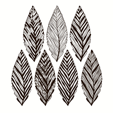 Abstract hand drawn leaves  Vector set  Vector