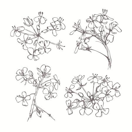 白の背景に分離白黒花のセットです。手描きのベクトル イラスト、スケッチ。デザインの要素。