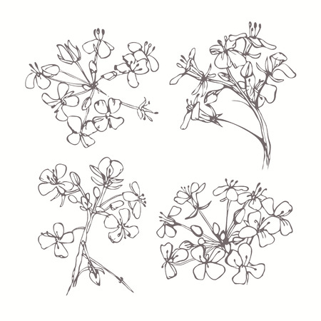 Set of monochrome flowers isolated on white background. Hand drawn vector illustration, sketch. Elements for design.