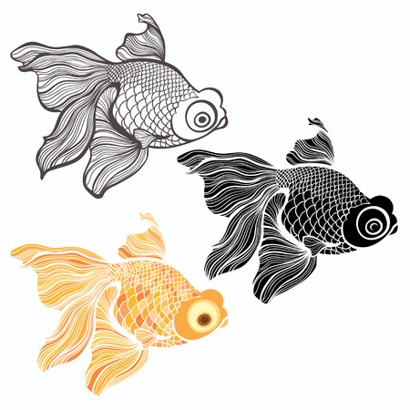 ichthyology: Goldfish, vector illustration isolated on white background