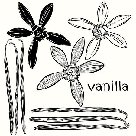 바닐라 설정합니다. 손으로 그린 벡터 일러스트, 디자인 요소로 사용할 수 있습니다.