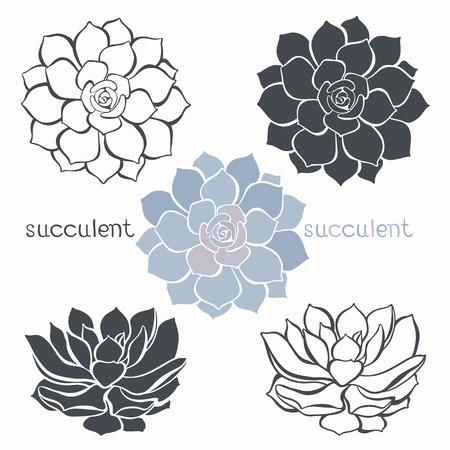 흰색 배경에 고립 된 다육 식물과 그래픽 세트. 손으로 그린 벡터 일러스트 레이 션, 스케치. 설계를위한 요소입니다.