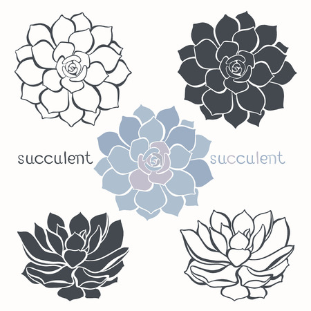 landscaping: Graphic set with succulents  isolated on white background. Hand drawn vector illustration, sketch. Elements for design.