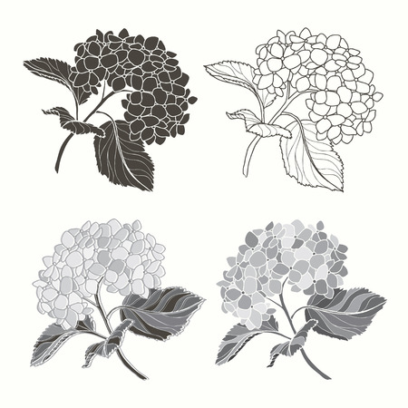 Set of hydrangeas  isolated on white background. Hand drawn vector illustration, sketch. Elements for design. Vector
