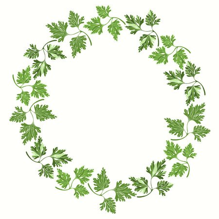 cilantro: Round frame with parsley on white background.  Hand drawn vector illustration. Illustration