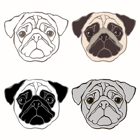 Vector set of  pugs face. Hand-drawn vector illustration. Sketch, four variants. Vector