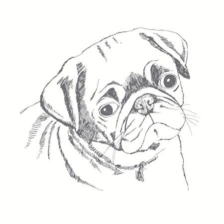 パグ犬の顔。ベクターの手描きイラスト。スケッチ。  イラスト・ベクター素材