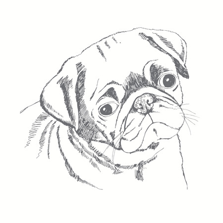 Pug dog face. Hand-drawn vector illustration. Sketch. Иллюстрация