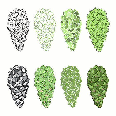 siberian pine: Vector set of  isolated cones on a white background. Illustration