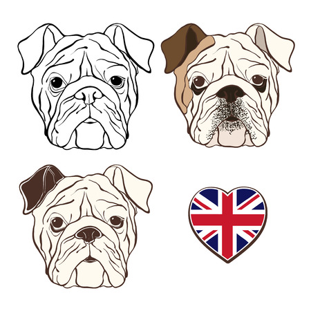 Vector set of  English bulldogs face and  heart flag UK. Hand-drawn vector illustration. Sketch,three variants. Illustration