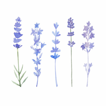 Watercolor lavender set. Lavender flowers isolated on white background. Vector illustration. Vettoriali