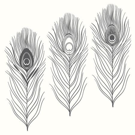 pluma de pavo real: Conjunto de plumas de pavo real aislados sobre fondo blanco. Mano vector dibujado, bosquejo. Elementos para el diseño.