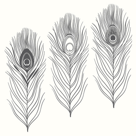 Set of peacock feathers  isolated on white background. Hand drawn vector illustration, sketch. Elements for design. Иллюстрация