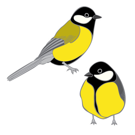 chickadee: A cute titmouses  isolated on a white background.  Hand-drawn vector  illustration. Illustration
