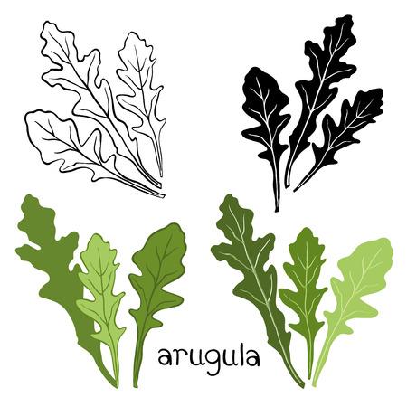 sprig: Set of arugula  isolated on white background.