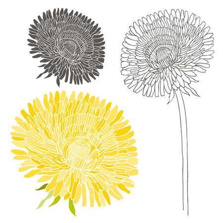 dandelion: Set of dandelion isolated on white background. Illustration