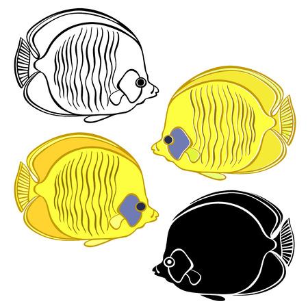 ichthyology: Fish, illustration isolated on white background.