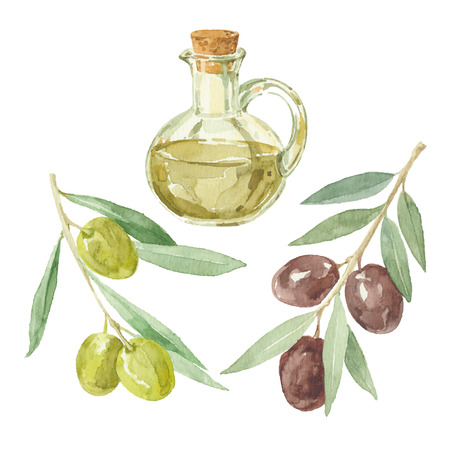 Olive branches and a bottle of olive oil drawing by watercolor. Ilustracja