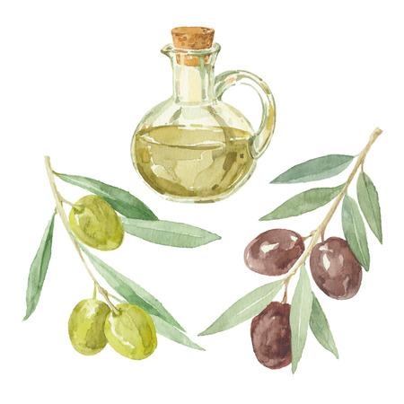 rama de olivo: Ramas de olivo y una botella de aceite de oliva de dibujo por la acuarela. Vectores
