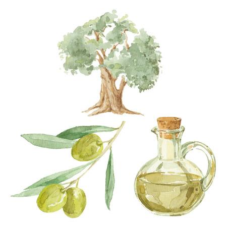 Rama de olivo, árbol y una botella de aceite de oliva de dibujo por la acuarela. Vectores