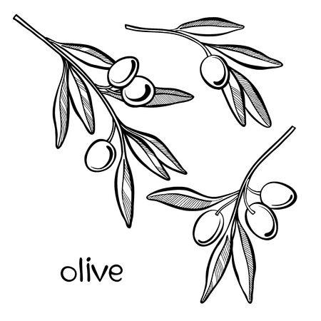 sprig: Set of olive branch  isolated on white background.