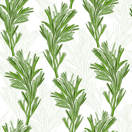rosemary: Seamless pattern with rosemary