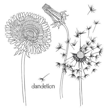 black and white flowers: Set of dandelion isolated on white background. Hand drawn vector illustration, sketch. Elements for design.