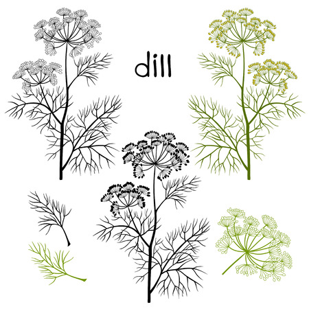 potherb: Set of dill  isolated on white background. Hand drawn vector illustration, sketch. Elements for design. Illustration