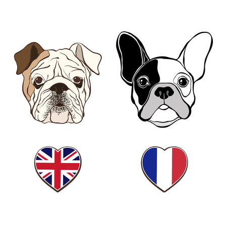 in french: English bulldog face and French Bulldog face  with  heart flags. Hand-drawn vector illustration, sketch.