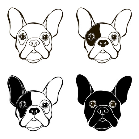 pure breed: French Bulldog. Vector set of  bulldogs face. Hand-drawn vector illustration. Sketch, four variants. Illustration