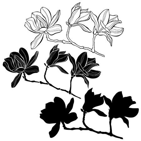 マグノリアの白い背景で隔離のセットです。手描きのベクトル イラスト、スケッチ。デザインの要素。