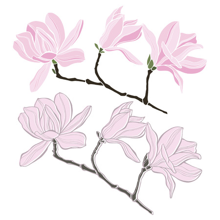 Set of magnolia isolated on white background. Hand drawn vector illustration, sketch. Elements for design. Vector