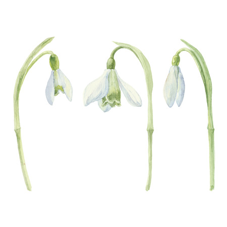Watercolor snowdrop set. Snowdrop flowers isolated on white background. Vector illustration. 일러스트