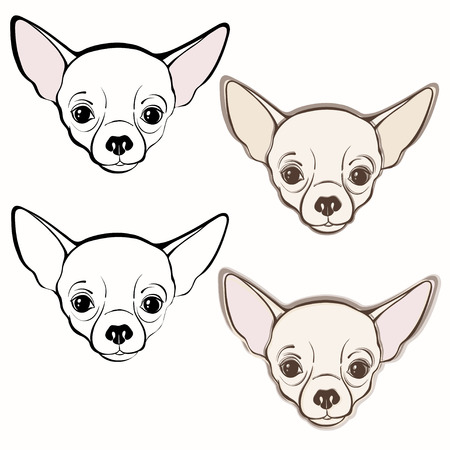 pure breed: Vector set of  chihuahuas face. Hand-drawn vector illustration. Sketch, four variants. Illustration