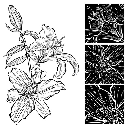 Lily. Black and white vector illustration. Can be greeting card or invitation.