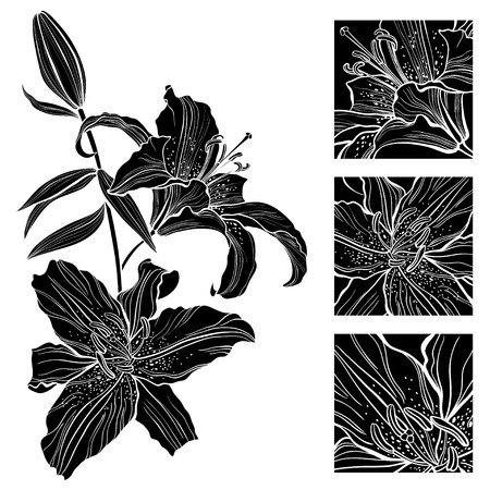 white lilly: Lily. Black and white vector illustration. Can be greeting card or invitation.