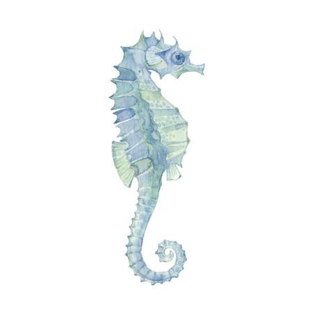 海の馬は、白い背景で隔離。ベクター、水彩の手描きイラスト。