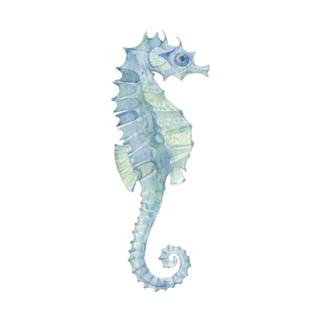 green fish: Sea horse isolated on a white background.Vector, watercolor hand drawn  illustration.
