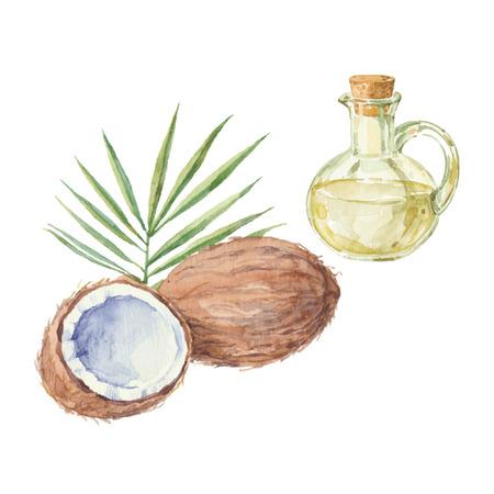 aceite de coco: Coco y una botella de aceite de coco de dibujo por la acuarela. Dibujado a mano ilustración vectorial aislado sobre un fondo blanco. Vectores