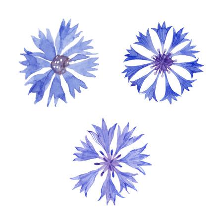 Watercolor cornflower set. Cornflower isolated on white background. Vector illustration.