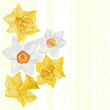 jonquil: Greeting card or invitation with spring flowers narcissus. Vector watercolor hand drawn illustration. Illustration