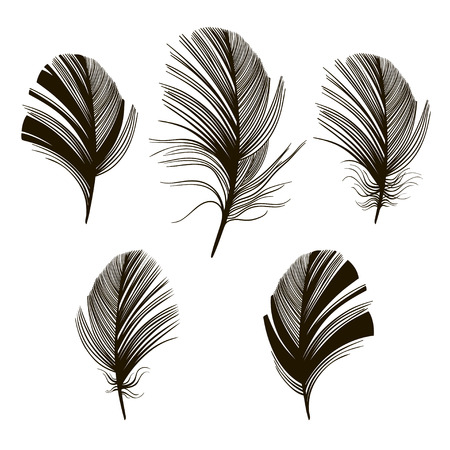 lightweight ornaments: Set of feather silhouettes on a white background.